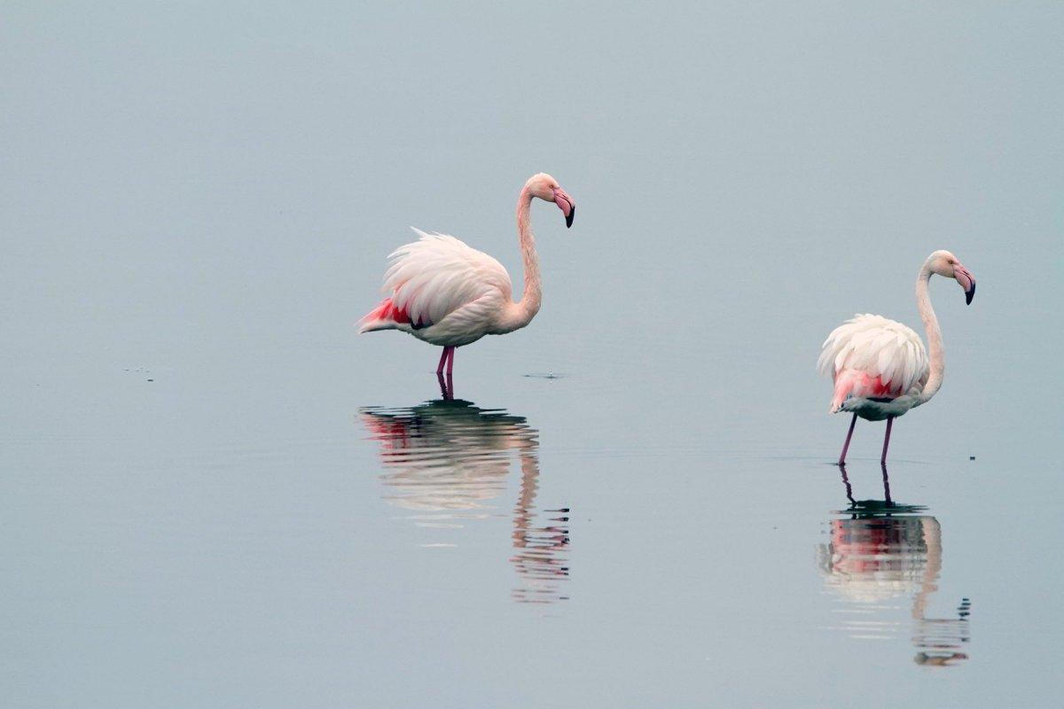Керкини - езерото на пеликаните и фламингото